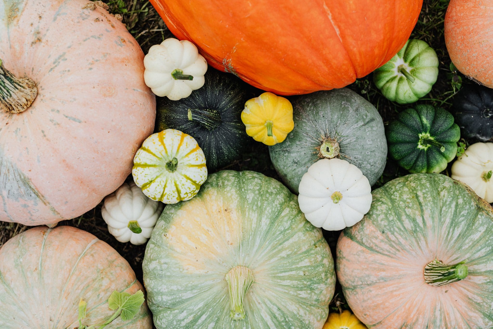 8 Fall Fruits and Vegetables & How to Use Them